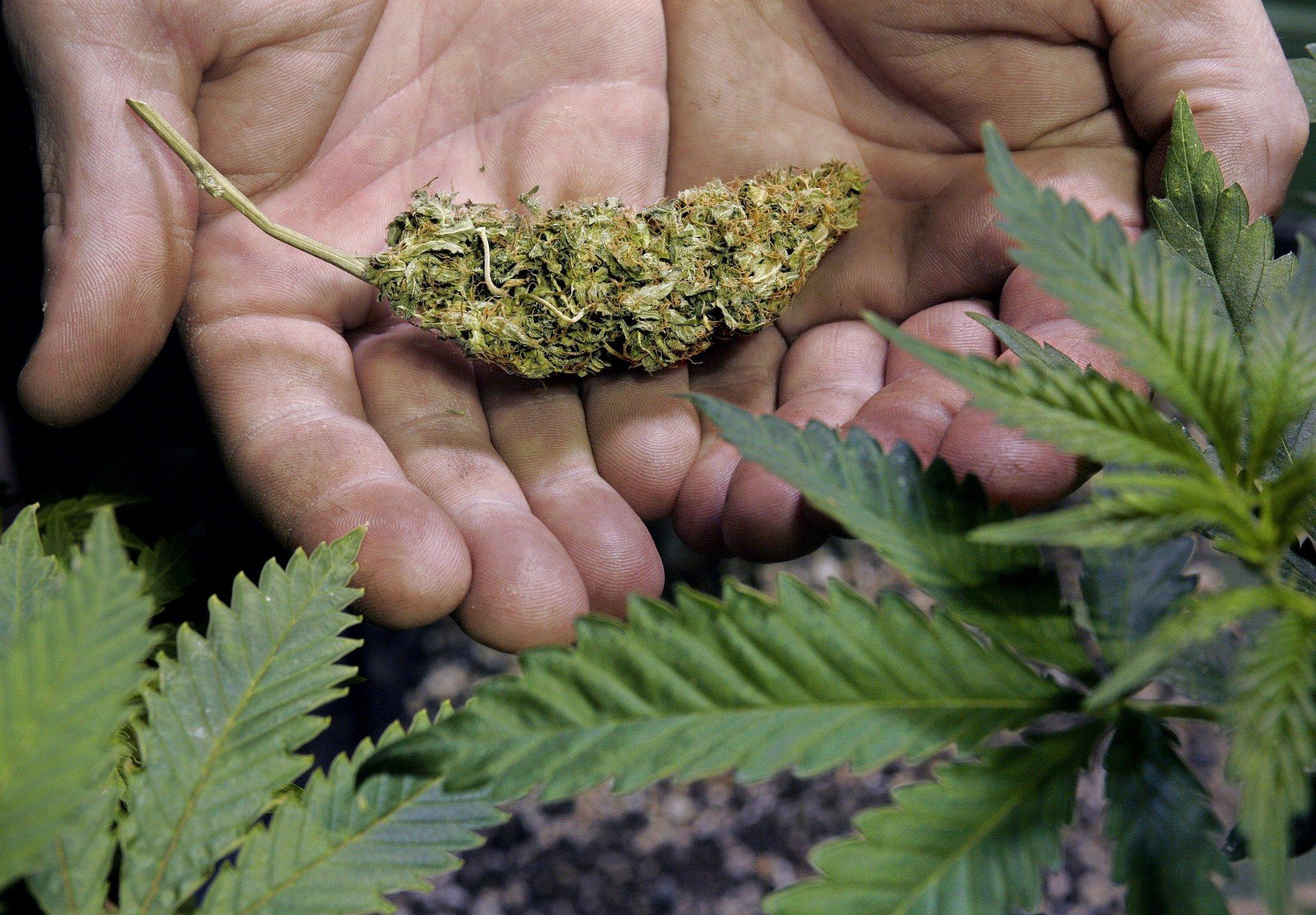Конопля аллах медведей новости марихуану